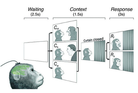 A Brain Network for Observed Social Threat Interactions | Neuroscience News | Brain Imaging and Neuroscience: The Good, The Bad, & The Ugly | Scoop.it