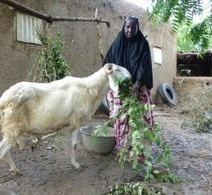 Mali: A practical approach to resilience   OCHA   Resilience   Scoop.it