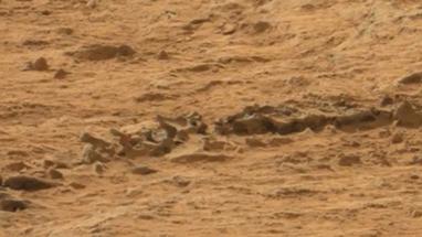LerobotCuriosityaurait-ildécouvertunsqueletteanimalsurMars? | About Curiosity... | Scoop.it
