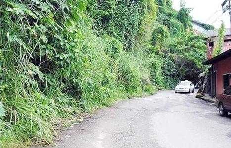 En la Guacara yace olvidada la vía central de la capital   EL MUNDO CON JULIA VERONICA   Scoop.it