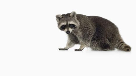 Biodiversity Crime: Tracking Invasive Species Like Criminals | Serendipity Café | Scoop.it