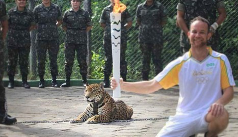Jaguar Killed Moments After Being Used In Olympic Torch Ceremony | Nature Animals humankind | Scoop.it