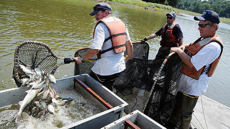 Tamarack Lake dam called 'high hazard' | Fish Habitat | Scoop.it