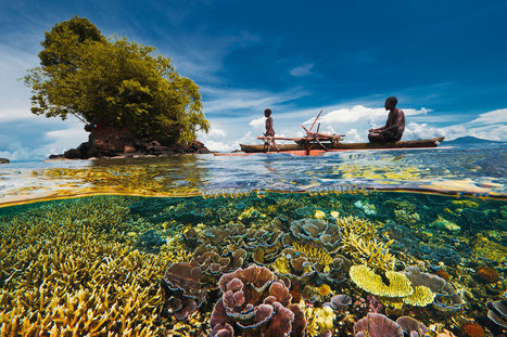 Coral Reefs Doing Better Than Expected in Many Areas | Biodiversity protection | Scoop.it