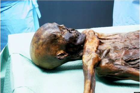 ITALIE : Brain Tissue Yields New Theory About Iceman's Death | World Neolithic | Scoop.it