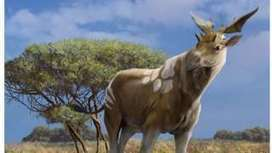 Scientists weigh in on 'giraffe relative' fossil - BBC News | GMOs & FOOD, WATER & SOIL MATTERS | Scoop.it