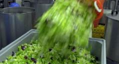 Salades en sachets : le risque bactériologique | Toxique, soyons vigilant ! | Scoop.it