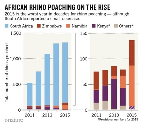 How Much Is Spent On Rhino Horn Demand Reduction Campaigns? | What's Happening to Africa's Rhino? | Scoop.it