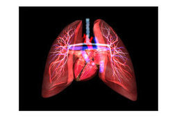 Respiratory System - By KidsBiology.com | The Systems of our bodies | Scoop.it