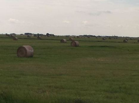 What sustainability means to a beef farming family in Saskatchewan   Agriculture and Food   Scoop.it
