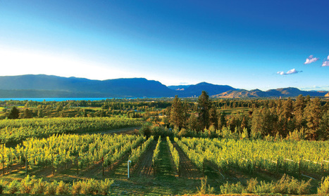 Wine & Spirits Magazine — The New Riesling Reality   Wines and Terroirs   Scoop.it