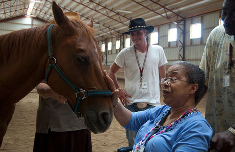 Caring for Horses Eases Symptoms of Dementia | News Room - The Ohio State University | The wonderful world of horses | Scoop.it