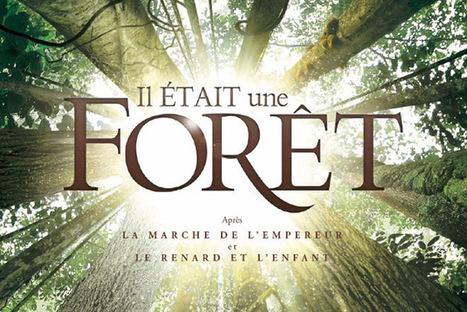 Ciné-débat - Il était une forêt - Mairie de Cannes | Culture à Nice et ses environs | Scoop.it