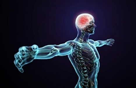 Biotech Companies Given Green Light to Attempt to Regenerate Brains of the Dead | Brain death | Scoop.it