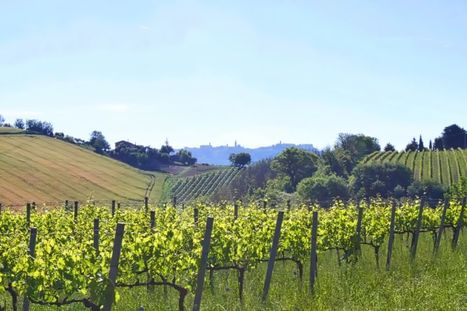 Le Marche Wine promoted in Australia | The Italian wine star that came back from oblivion | Wines and People | Scoop.it