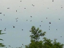 Meanwhile, in Brazil, spiders have taken over an entire town | Wait... What? | Scoop.it
