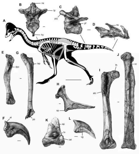 """Even Weirder Than We Imagined"" - Anzu Wyliei, The Dinosaur Chicken From Hell | Skylarkers | Scoop.it"