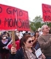 Rothamsted mention, Maurice Moloney quote: Monsanto drops GM in Europe | BIOSCIENCE NEWS | Scoop.it