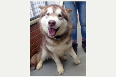 Hundreds of potential owners offer to re-home rescue dog Bailey | Lincolnshire | Scoop.it