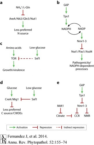 Mechanisms of Nutrient Acquisition and Utilization During Fungal Infections of Leaves | MycorWeb Plant-Microbe Interactions | Scoop.it