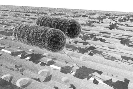 Image: E. coli on cellulosic biomass | Science Education and Communication | Scoop.it