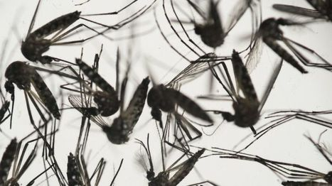BBC NEWS: Scientists clone Zika for vaccine race | University of Manchester in the news | Scoop.it