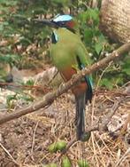 National Bird | Nicaragua, Jessica Ferretiz | Scoop.it