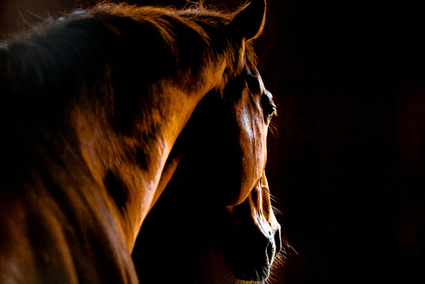 The Brutal and Secretive Trade of American Horses Killed For Their Meat | fitness, health,news&music | Scoop.it