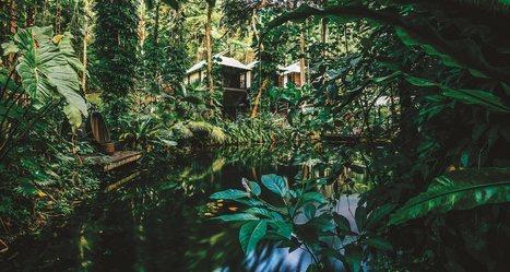 Aventure : les plus beaux hôtels à découvrir dans la jungle | Tout sur le Tourisme | Scoop.it