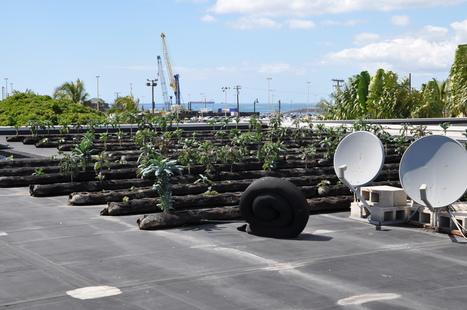 Rooftop Farm abov