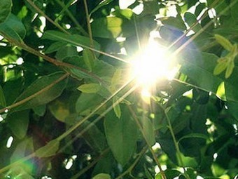 Breakthrough Rivals Speed of Natural Photosynthesis, Sets Solar Energy World Record | Social Foraging | Scoop.it