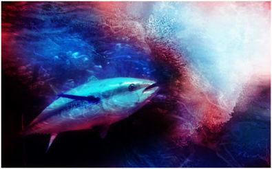 Unprecedented action taken to halt tuna overfishing in Indian Ocean - Fish2Fork | Biodiversity protection | Scoop.it