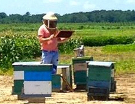Congratulations to Michael Simone-Finstrom for NIFA Postdoctoral Fellowship to study honey bees | Research from the NC Agricultural Research Service | Scoop.it