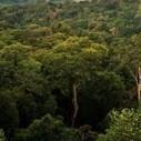 Le recul de la déforestation fait baisser les émissions de 16% en Amazonie | Deforestation | Scoop.it