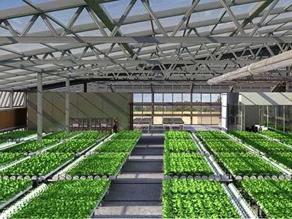 Mega-Farms to Hit City Rooftops | Walkerteach Geo | Scoop.it