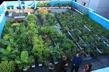 Les URBAINCULTEURS ou l'art de faire pousser le jardinage en ville ! | CCA Actions | Locavore | Manger Juste & Local | Scoop.it