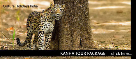 Kanha Tour Packages | Tour Operator India | Scoop.it