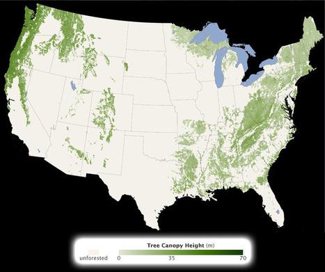 carte mondiale de la hauteur des arbres - NASA   cartography & mapping   Scoop.it