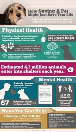 Mental Health Benefits Of Owning A Pet Infographic | Health Infographics | Scoop.it