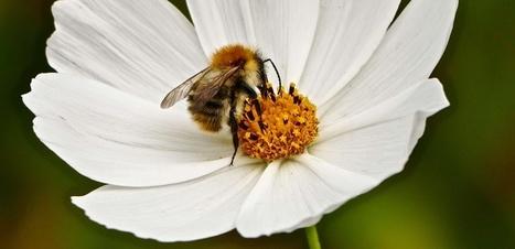 Les abeilles remplacées par des drones ? Harvard y travaille | Fédération Belge du Drone civil | Scoop.it