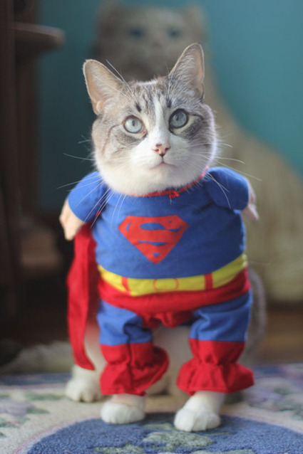 Supercat | Funny and crazy cats | Scoop.it