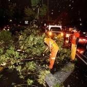 Fuerte viento derriba seis árboles en la zona centro del DF | Revista Arte y Bohemia | Scoop.it