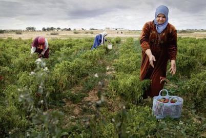 Tunisie. Samir Ettaïeb : «L'agriculture doit être exclue de l'accord de libre-échange avec l'UE» | Chimie verte et agroécologie | Scoop.it