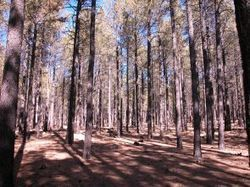 Thinning Is In: Team Helps to Tame Wildfires | NZ Health Tech (Blog) | CALS in the News | Scoop.it