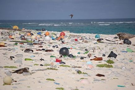Marine Debris Affects Hundreds of Species - Conservation Jobs | Sandy Beach Ecology & Management | Scoop.it
