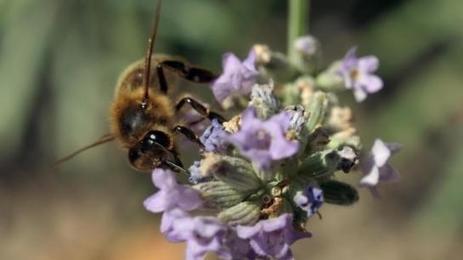 La disparition des abeilles pourrait provoquer une augmentation de la mortalité mondiale | Toxique, soyons vigilant ! | Scoop.it