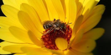 Pesticides : les mathématiques au secours des abeilles   EntomoNews   Scoop.it