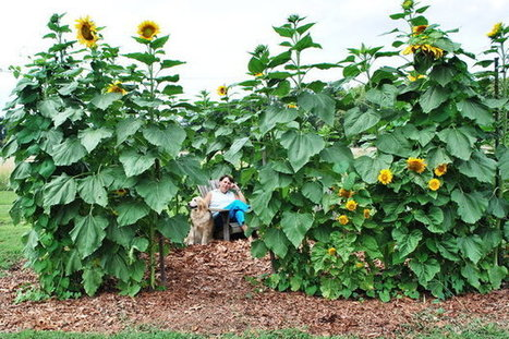 Diggin' In: Gardens that produce healthy kids in summer | School Gardening Resources | Scoop.it
