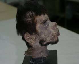 Shrunken Head DNA Proves Horrific Folklore True : Discovery News | Archaeology News | Scoop.it