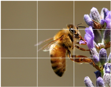 Rule of Thirds | 3 Rules of Composing Good Photos | Scoop.it
